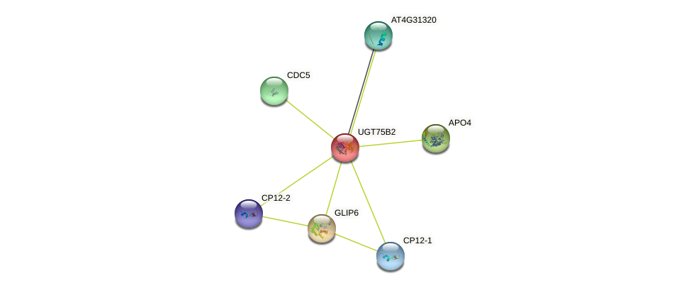 UGT75B2 protein (Arabidopsis thaliana) - STRING interaction network