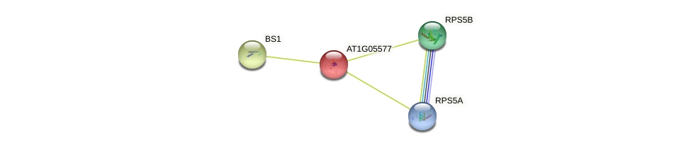 AT1G05577 protein (Arabidopsis thaliana) - STRING interaction network