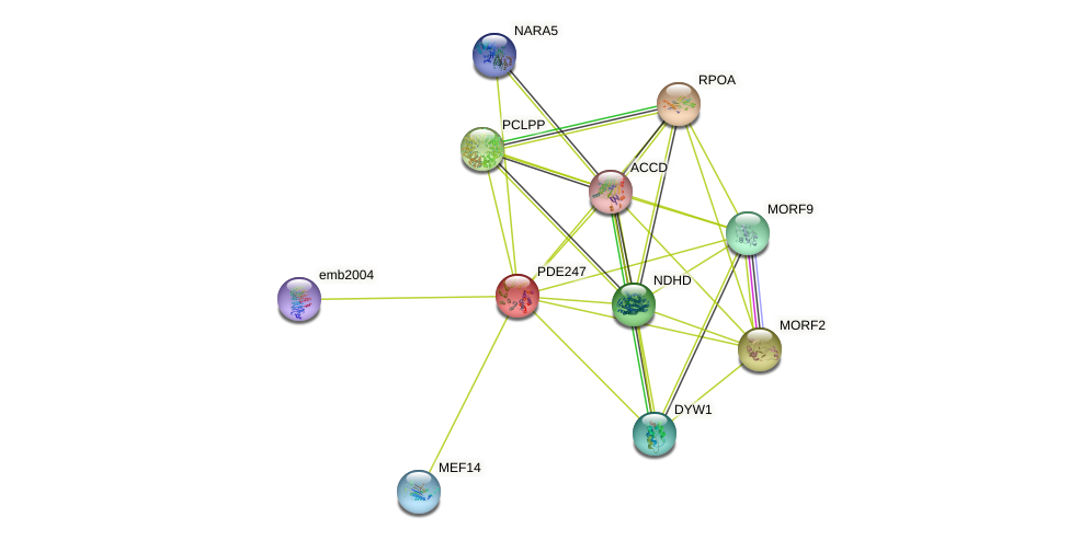 PDE247 protein (Arabidopsis thaliana) - STRING interaction network