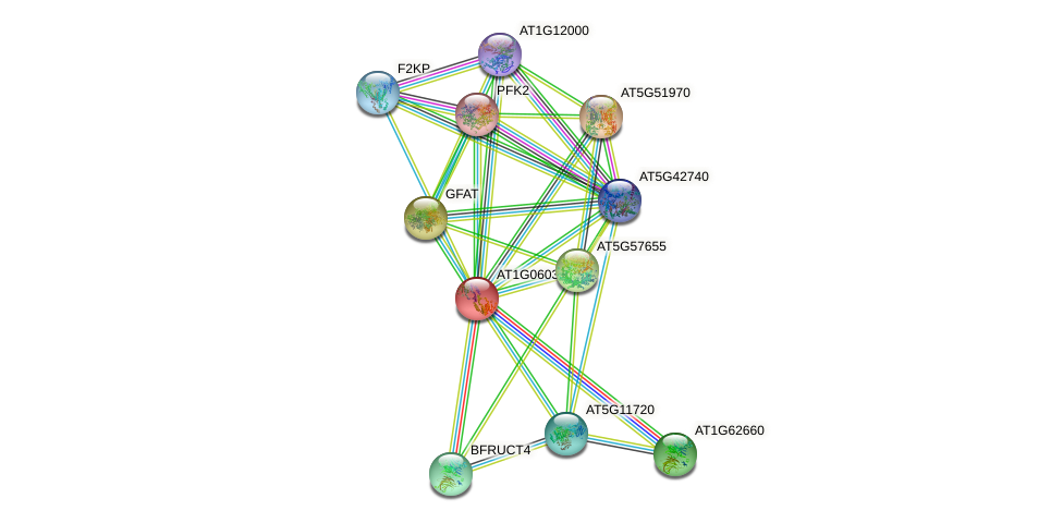 AT1G06030 protein (Arabidopsis thaliana) - STRING interaction network