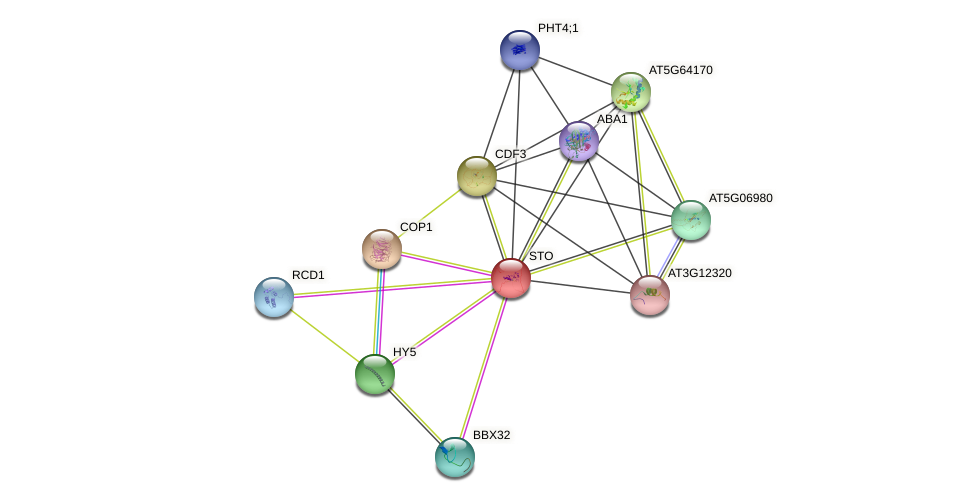 STO protein (Arabidopsis thaliana) - STRING interaction network