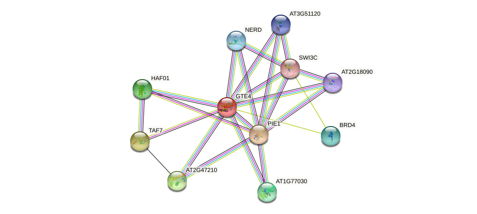 GTE4 protein (Arabidopsis thaliana) - STRING interaction network