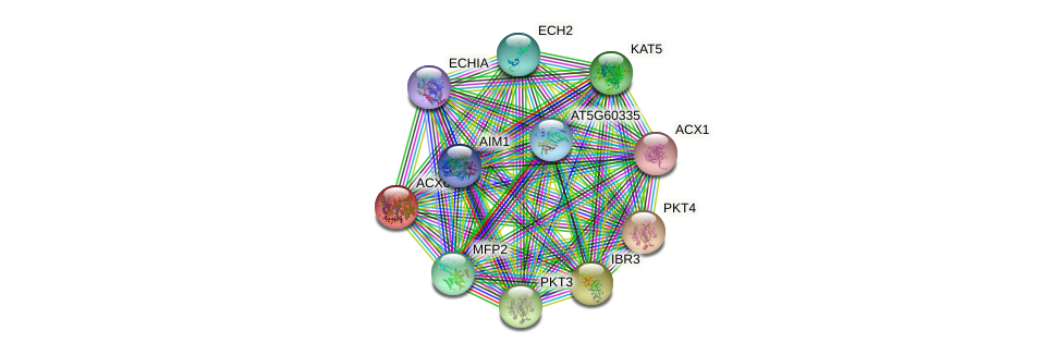 ACX6 protein (Arabidopsis thaliana) - STRING interaction network