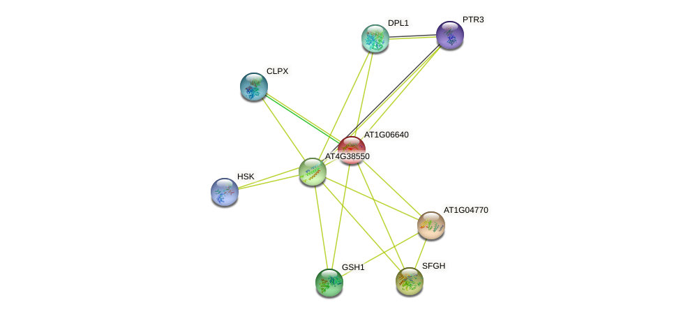 AT1G06640 protein (Arabidopsis thaliana) - STRING interaction network