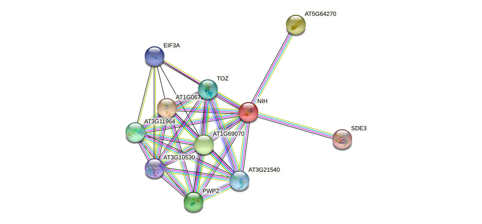 NIH protein (Arabidopsis thaliana) - STRING interaction network