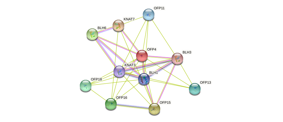 OFP4 protein (Arabidopsis thaliana) - STRING interaction network
