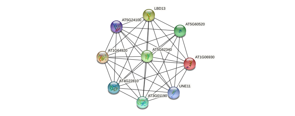 AT1G06930 protein (Arabidopsis thaliana) - STRING interaction network