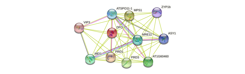 DFO protein (Arabidopsis thaliana) - STRING interaction network