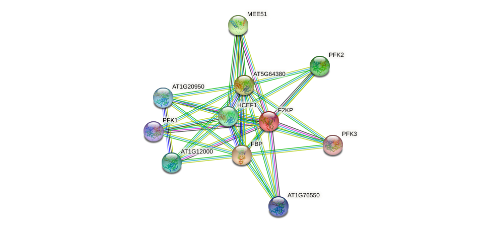 F2KP protein (Arabidopsis thaliana) - STRING interaction network