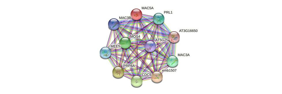 MAC5A protein (Arabidopsis thaliana) - STRING interaction network