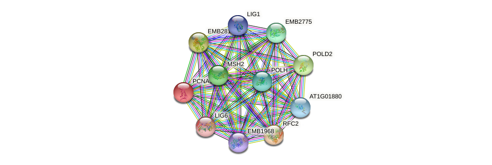 PCNA1 protein (Arabidopsis thaliana) - STRING interaction network
