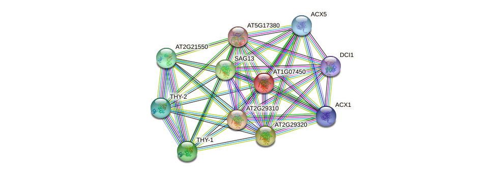 AT1G07450 protein (Arabidopsis thaliana) - STRING interaction network