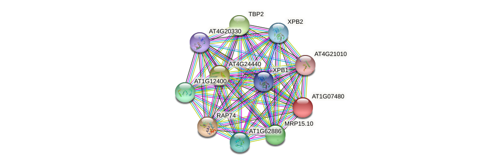 AT1G07480 protein (Arabidopsis thaliana) - STRING interaction network