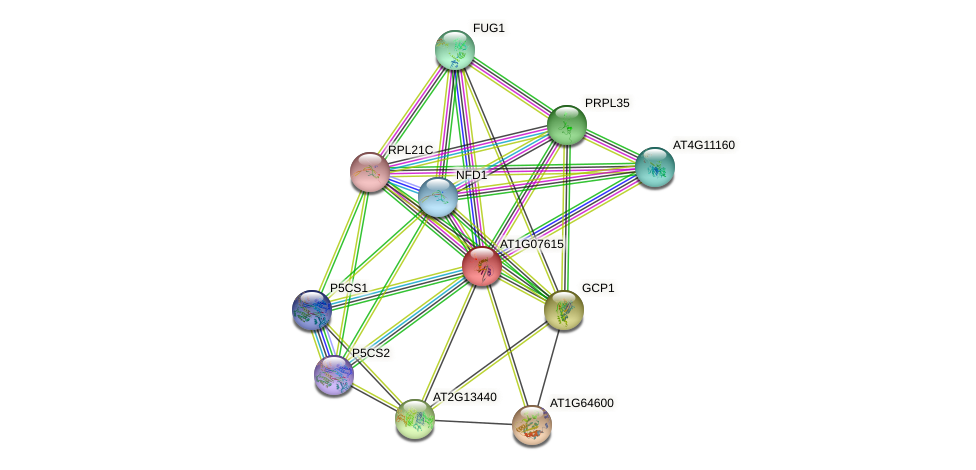 AT1G07615 protein (Arabidopsis thaliana) - STRING interaction network