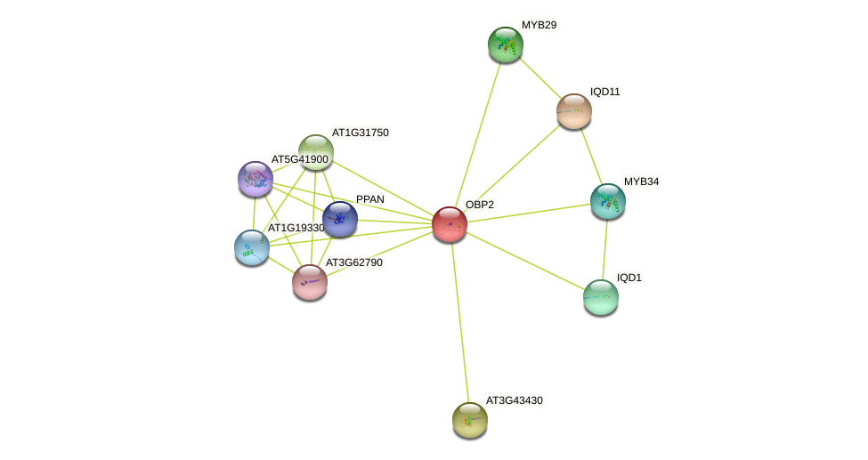 OBP2 protein (Arabidopsis thaliana) - STRING interaction network