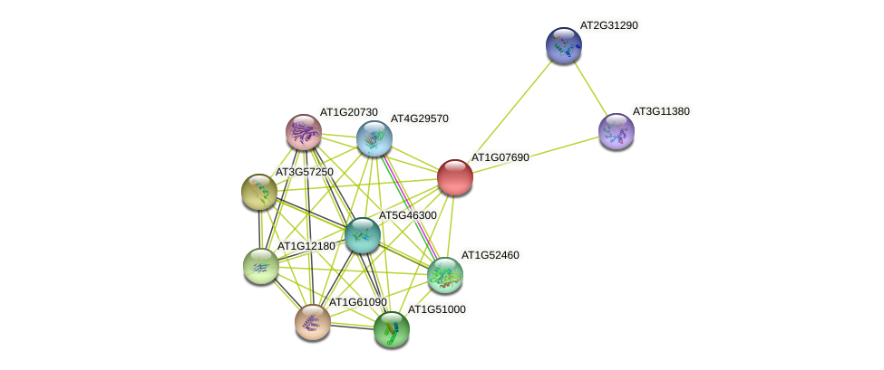 AT1G07690 protein (Arabidopsis thaliana) - STRING interaction network
