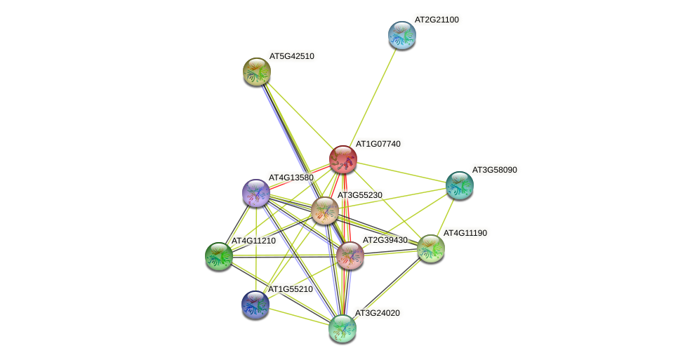AT1G07740 protein (Arabidopsis thaliana) - STRING interaction network