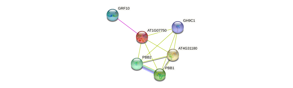 AT1G07750 protein (Arabidopsis thaliana) - STRING interaction network