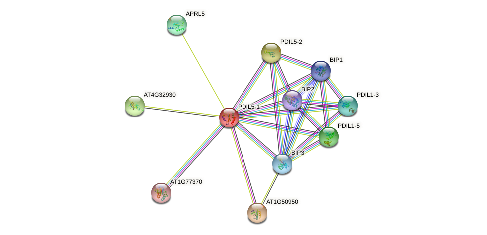 PDIL5-1 protein (Arabidopsis thaliana) - STRING interaction network