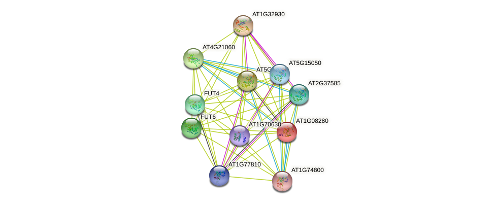 AT1G08280 protein (Arabidopsis thaliana) - STRING interaction network