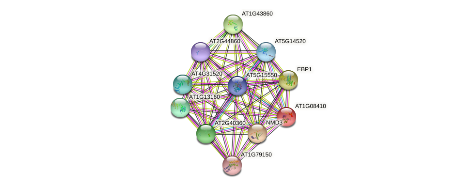AT1G08410 protein (Arabidopsis thaliana) - STRING interaction network