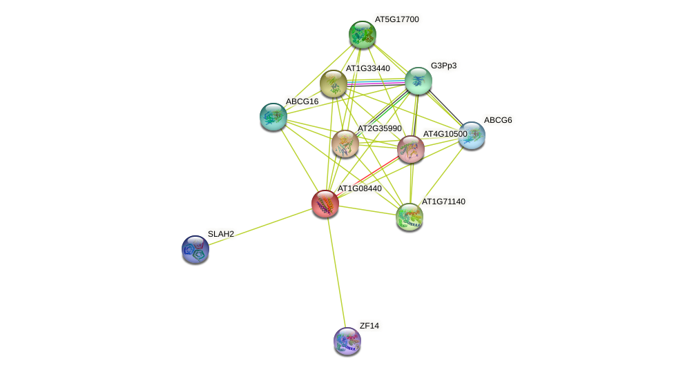 AT1G08440 protein (Arabidopsis thaliana) - STRING interaction network
