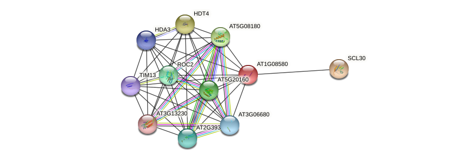 AT1G08580 protein (Arabidopsis thaliana) - STRING interaction network