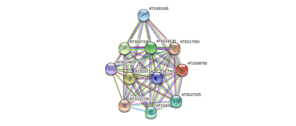 AT1G08750 protein (Arabidopsis thaliana) - STRING interaction network