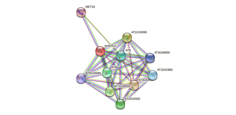 emb2411 protein (Arabidopsis thaliana) - STRING interaction network