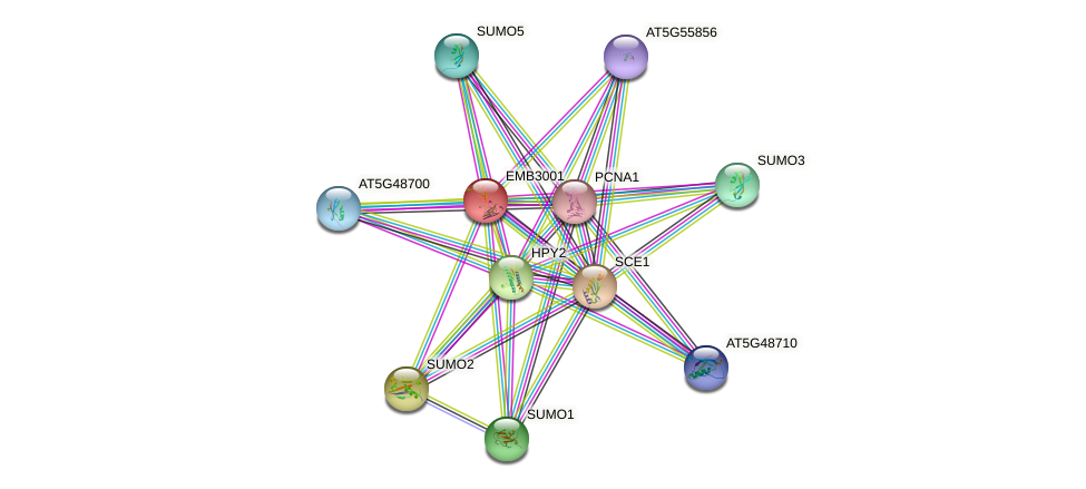 EMB3001 protein (Arabidopsis thaliana) - STRING interaction network