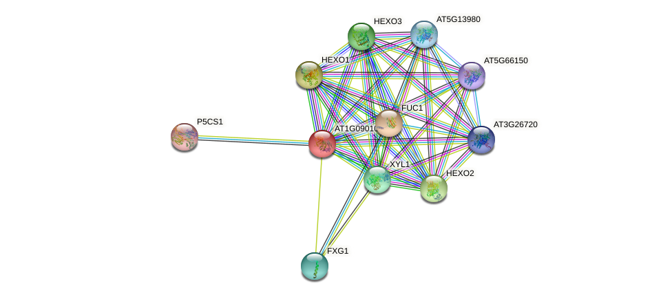 AT1G09010 protein (Arabidopsis thaliana) - STRING interaction network