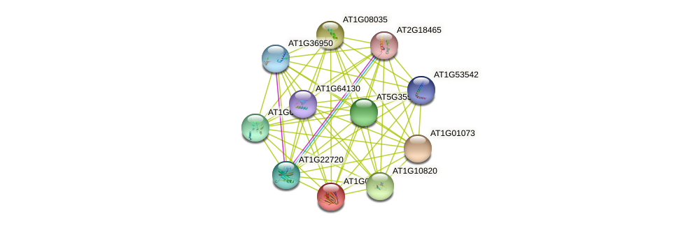 AT1G09060 protein (Arabidopsis thaliana) - STRING interaction network