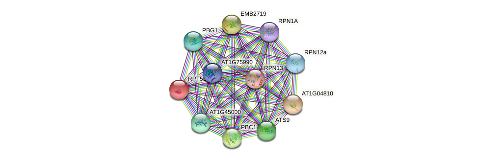 RPT5B protein (Arabidopsis thaliana) - STRING interaction network