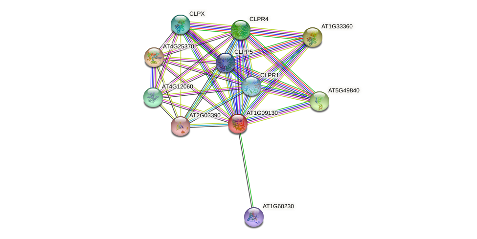 AT1G09130 protein (Arabidopsis thaliana) - STRING interaction network