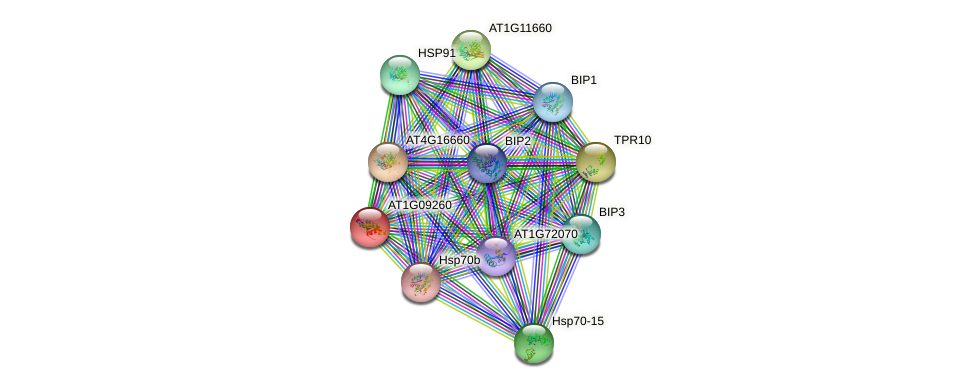 AT1G09260 protein (Arabidopsis thaliana) - STRING interaction network
