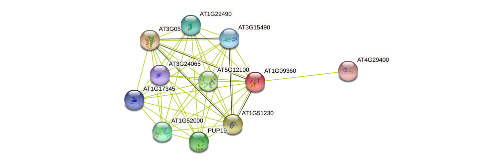 AT1G09360 protein (Arabidopsis thaliana) - STRING interaction network