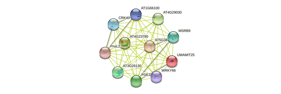 UMAMIT25 protein (Arabidopsis thaliana) - STRING interaction network