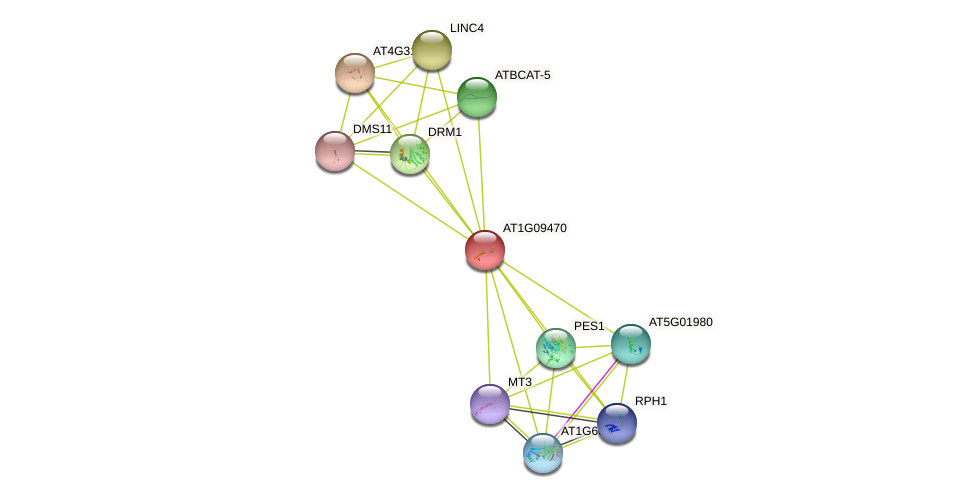 AT1G09470 protein (Arabidopsis thaliana) - STRING interaction network