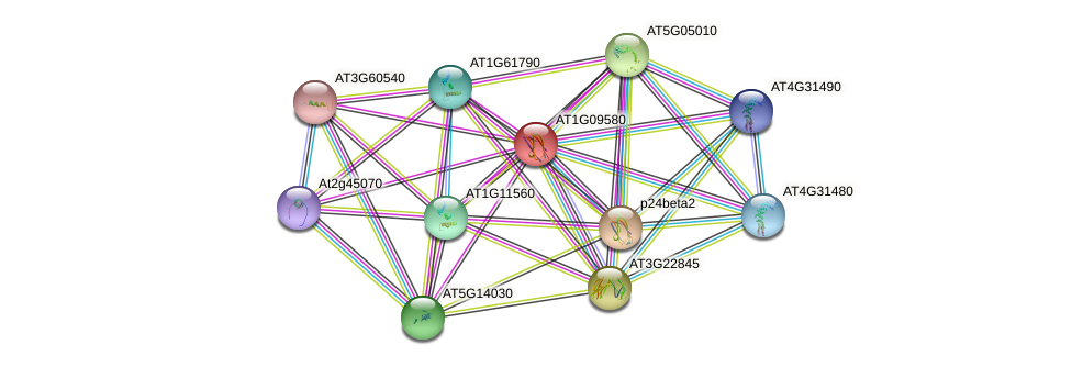 AT1G09580 protein (Arabidopsis thaliana) - STRING interaction network