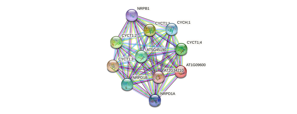 AT1G09600 protein (Arabidopsis thaliana) - STRING interaction network