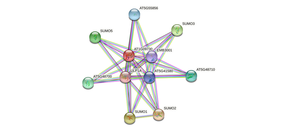AT1G09730 protein (Arabidopsis thaliana) - STRING interaction network