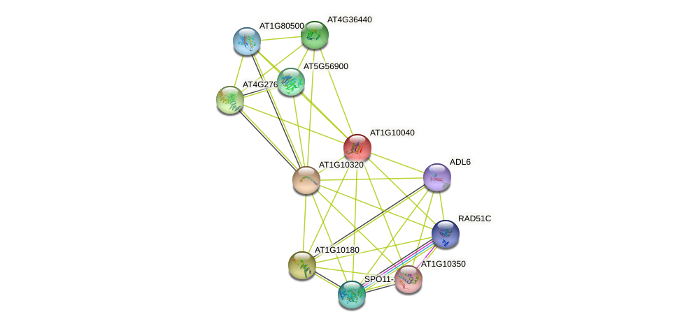 AT1G10040 protein (Arabidopsis thaliana) - STRING interaction network