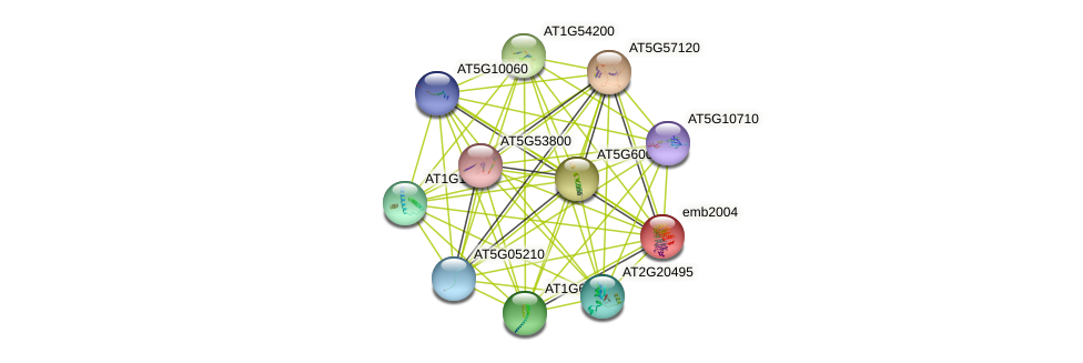 emb2004 protein (Arabidopsis thaliana) - STRING interaction network