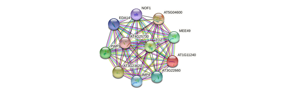 AT1G11240 protein (Arabidopsis thaliana) - STRING interaction network