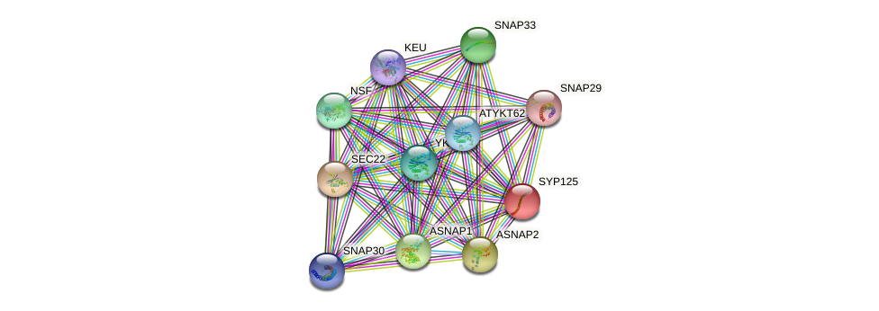 SYP125 protein (Arabidopsis thaliana) - STRING interaction network