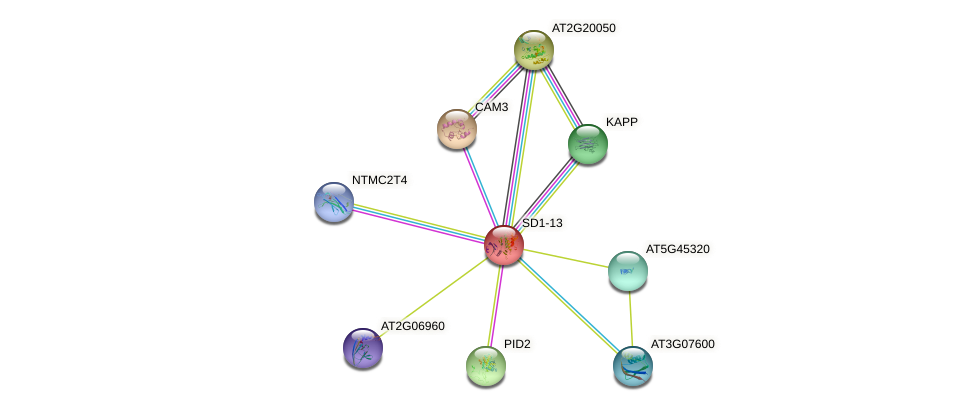 SD1-13 protein (Arabidopsis thaliana) - STRING interaction network