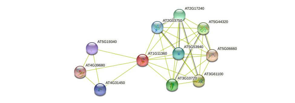 AT1G11360 protein (Arabidopsis thaliana) - STRING interaction network
