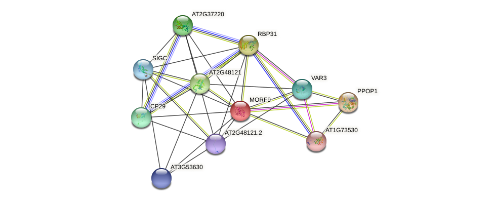 MORF9 protein (Arabidopsis thaliana) - STRING interaction network