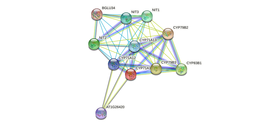 CYP71A18 protein (Arabidopsis thaliana) - STRING interaction network