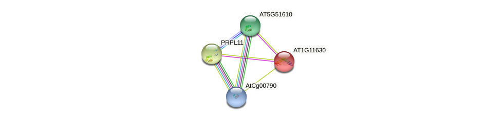 AT1G11630 protein (Arabidopsis thaliana) - STRING interaction network